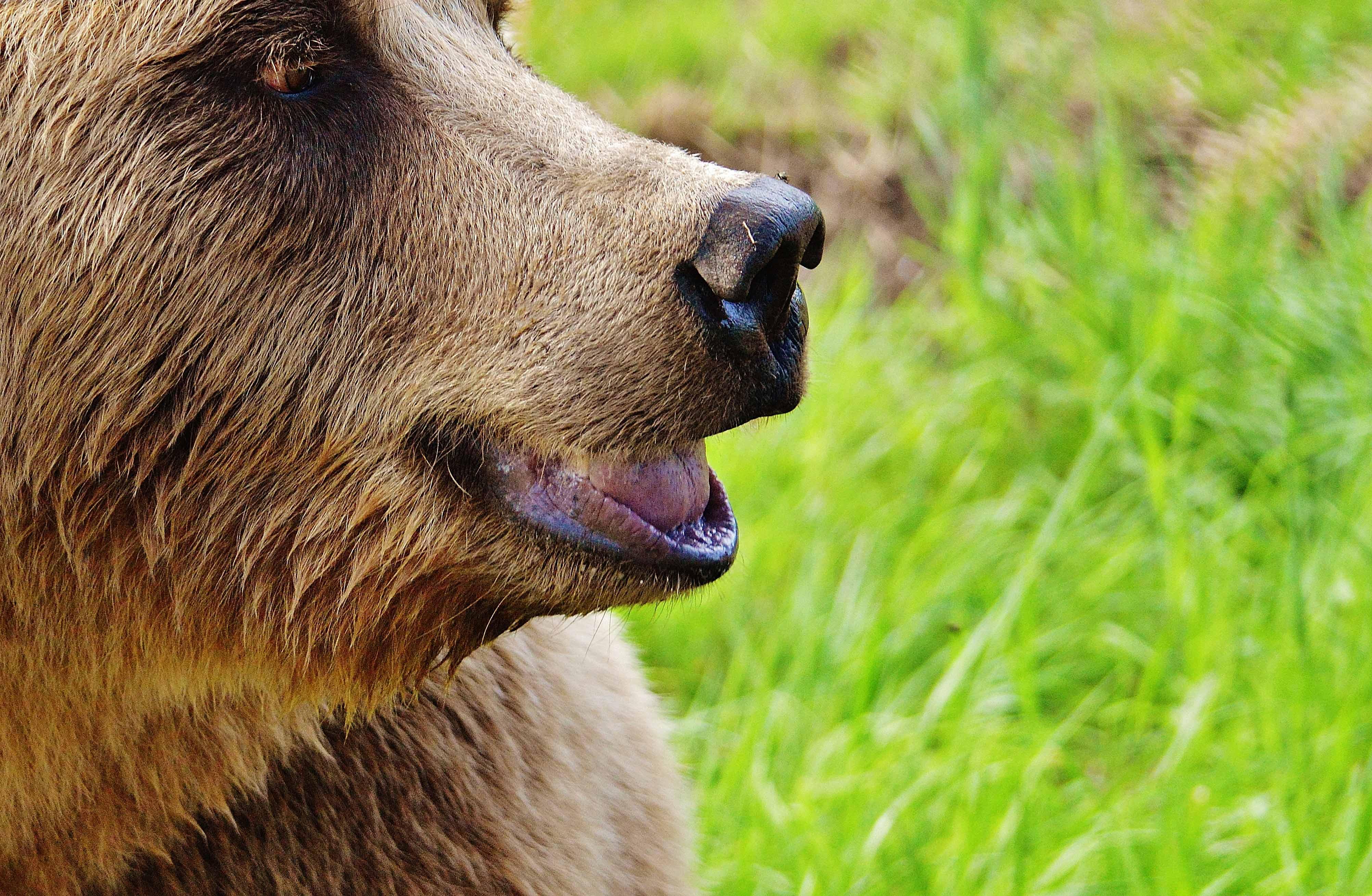 avistamiento-de-osos-proaza
